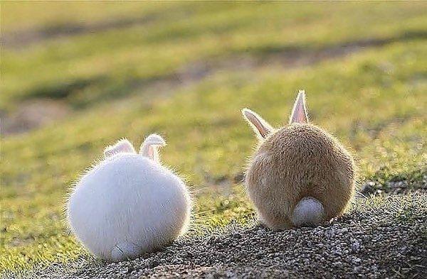 Very Round Animals
