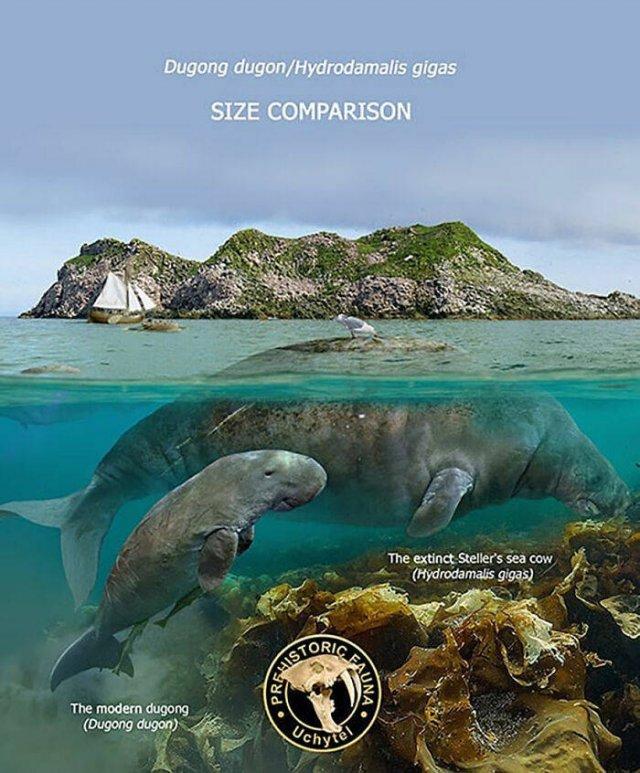 Extinct Prehistoric Animals Vs. Modern Animals