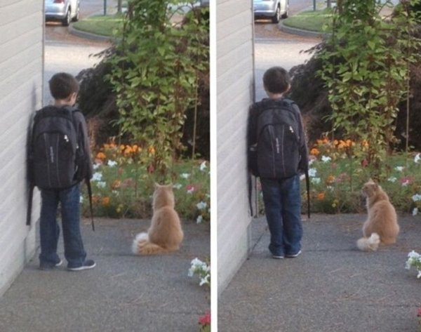 Friendship Between People And Animals