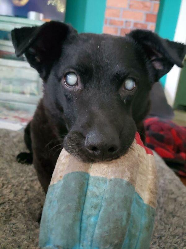 Rescued Pets, part 2