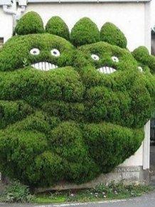 Unusual Gardens