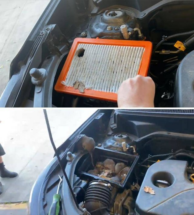 Pictures Taken By Car Mechanics