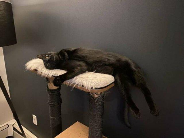 Hilarious Cats, part 9