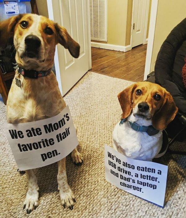 Pet Shaming, part 3