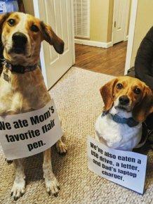 Dogs Shaming