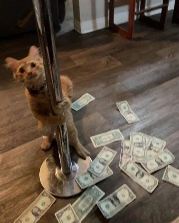 Hilarious Cats, part 10