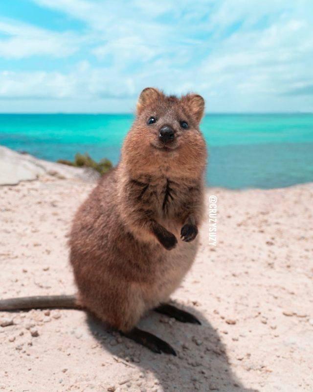 Cute Animals, part 15