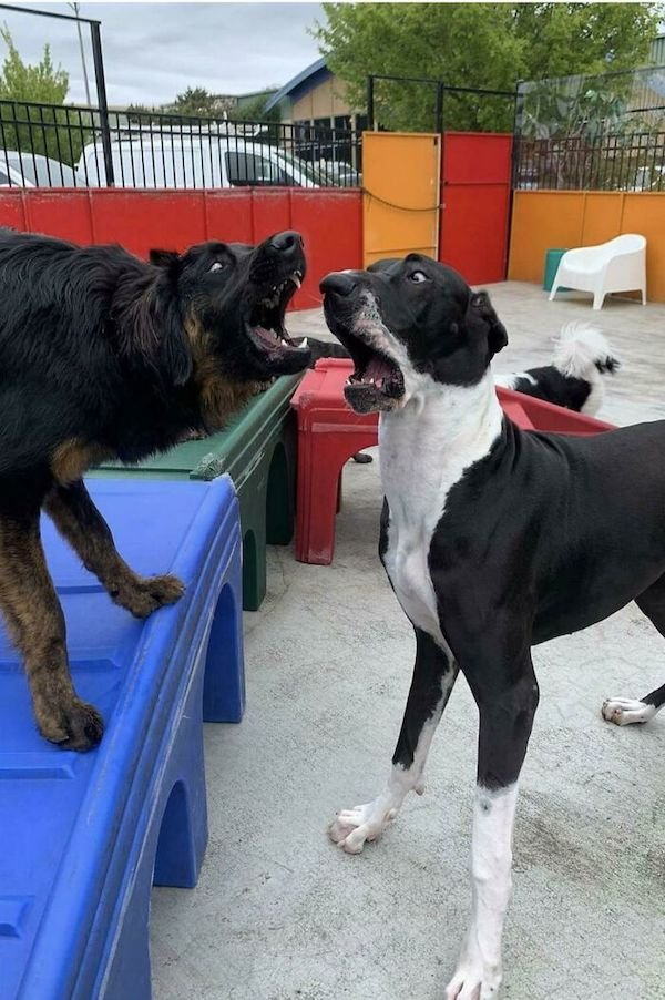 These Dogs Are Broken, part 3