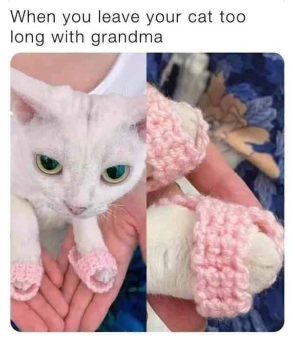 Hilarious Cats, part 11