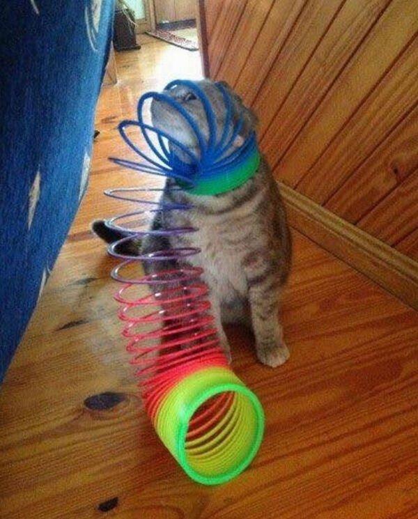 Hilarious Cats, part 12