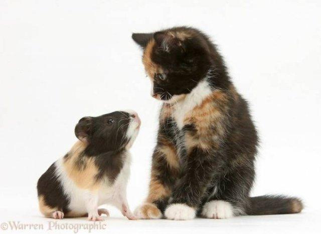 Animal Doppelgangers
