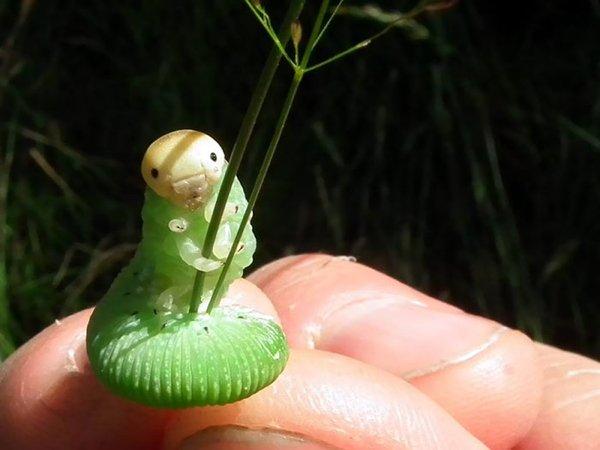Cute Tiny Animals