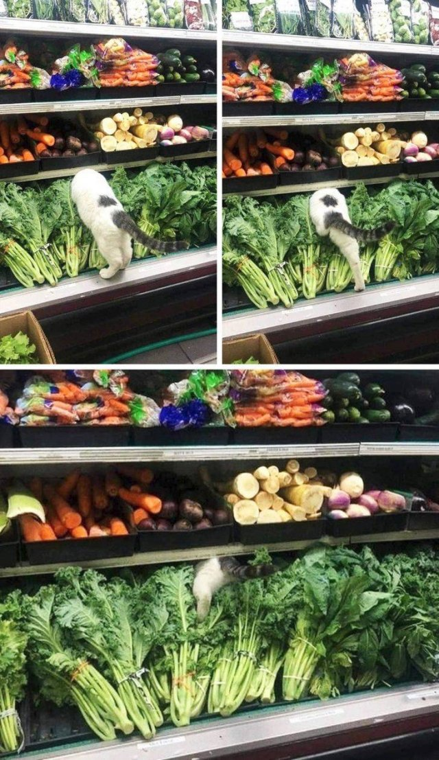 Things That May Impress You In Supermarkets