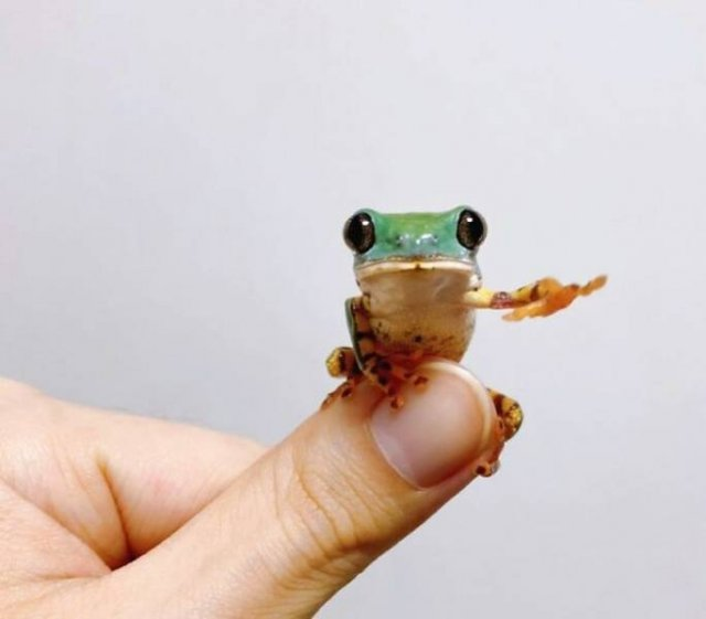 Small And Cute Animals