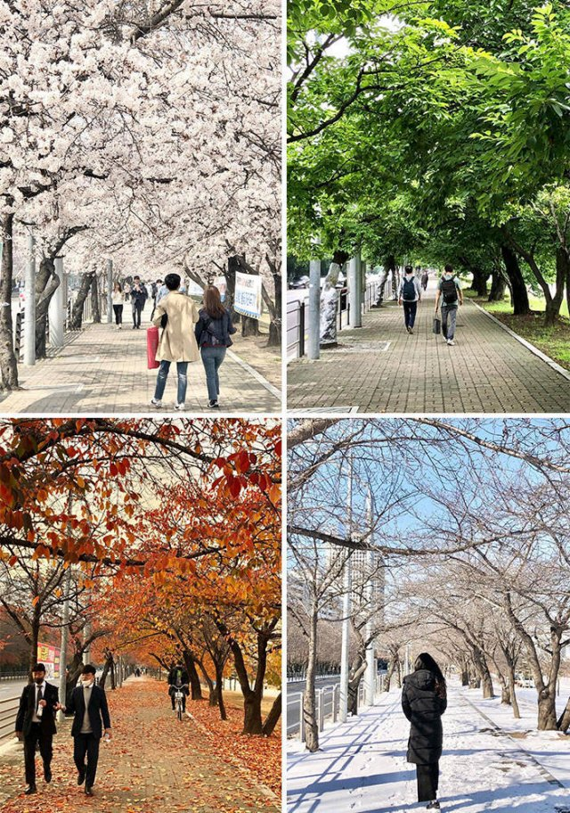 Life In South Korea, part 7