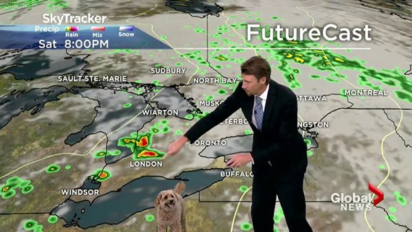 When Dog Rocks The Weather Forecast