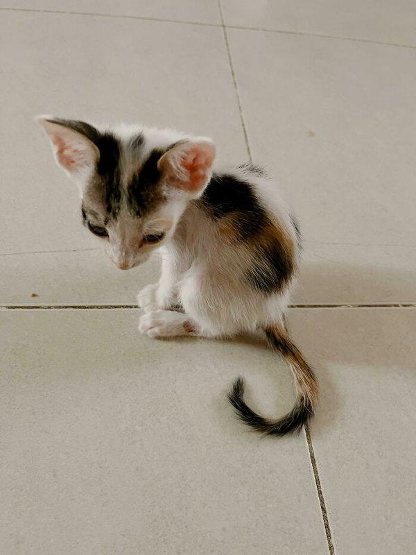 Rescued Pets, part 3