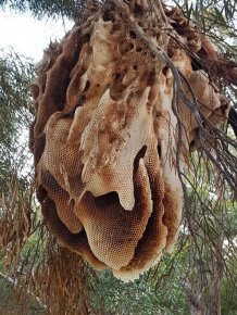 This Is Trypophobia