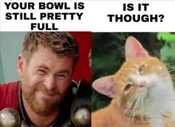 Cats Memes And Pictures, part 5