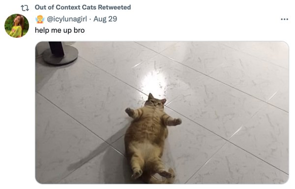 Out Of Context Cats