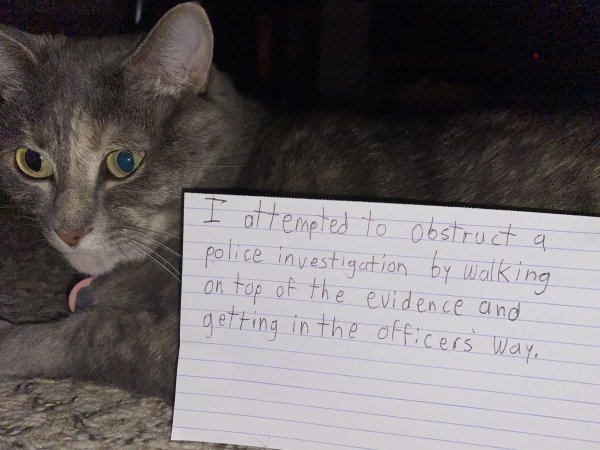 Pet Shaming, part 4