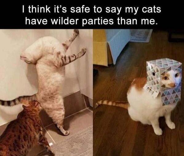 Hilarious Cats, part 14