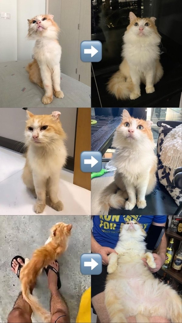 Animals Before And After Adoption, part 2