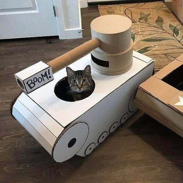 Hilarious Cats, part 15