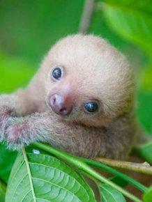Baby Animal Photos