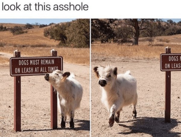 Cute Animals, part 16