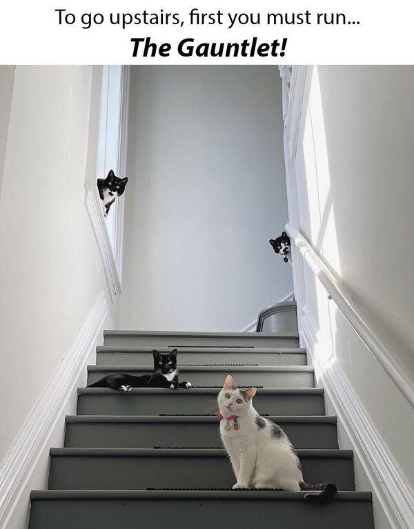 Hilarious Cats, part 16