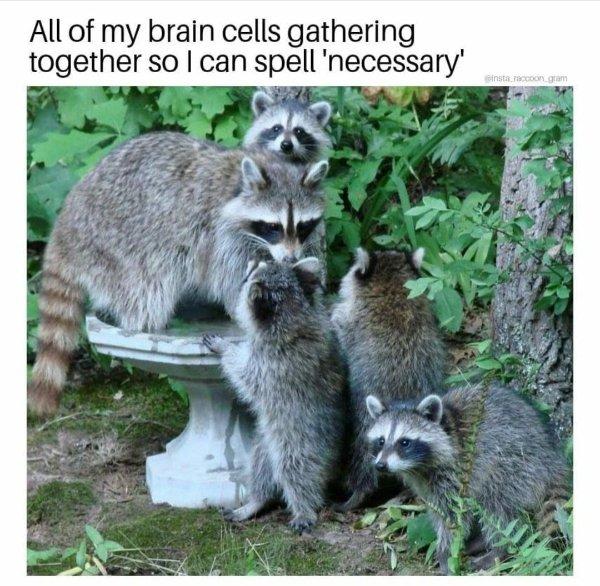 Random Funny Memes, part 244