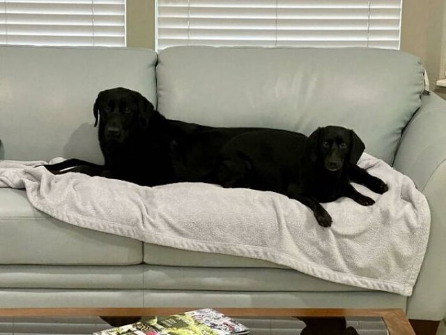 These Dogs Are Broken, part 4