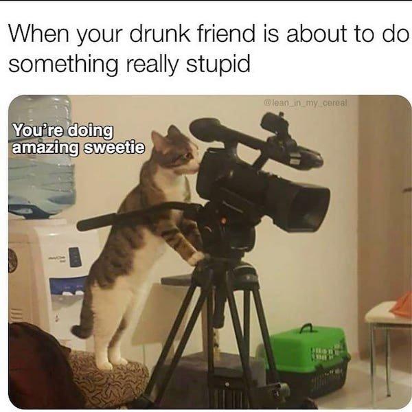 Cat Memes, part 5