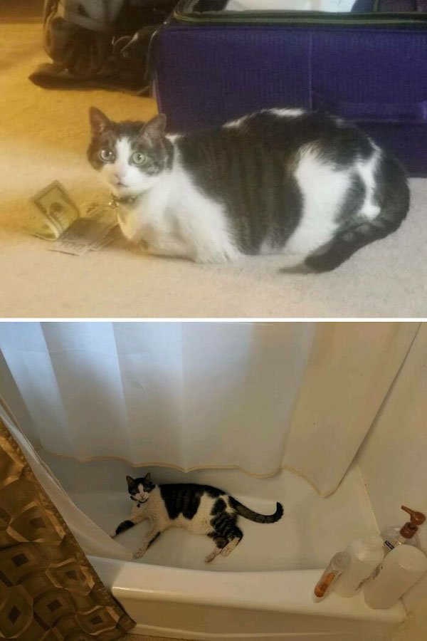 Pets Losing Weight