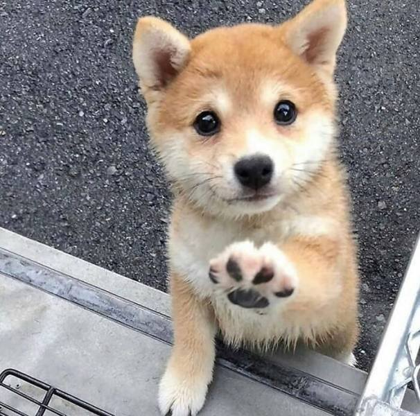 Cute Dogs, part 4