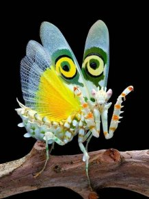 Curious Insects